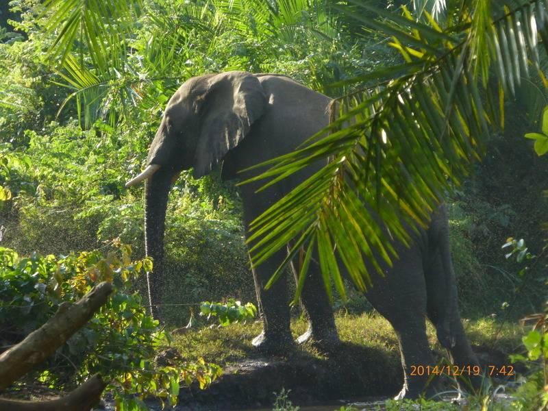elephant in Chebera Chuchura National Park, West Ethiopia