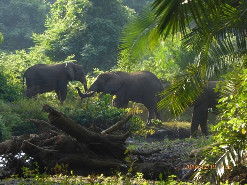 elephants in Chebera Chuchura National Park, West Ethiopia