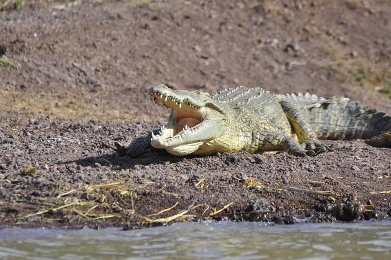 crocodile market Chamo Lake Arba Minch Rift Valley South Ethiopia