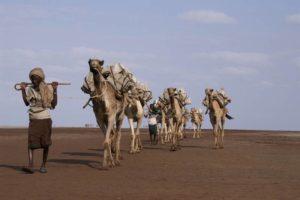 Caravane de sel dans le désert du Danakil, région des Afars, Ethiopie