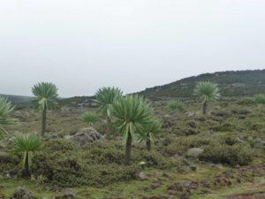 Paysage des montagnes Balé dans le sud de l'Ethiopie
