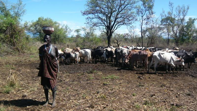 Mursi woman and cattle in Mago National Park, Omo Valley, South Ethiopia
