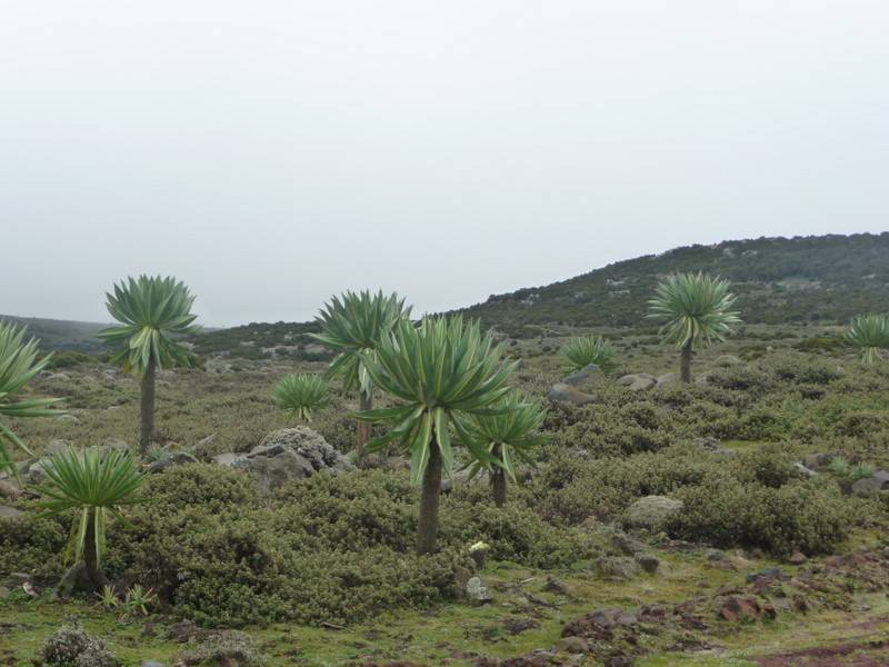 Landscape in Bale Mountains, south Ethiopia